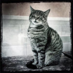 Robin Davis Photography - Italy Cat - Little Prints on Metal