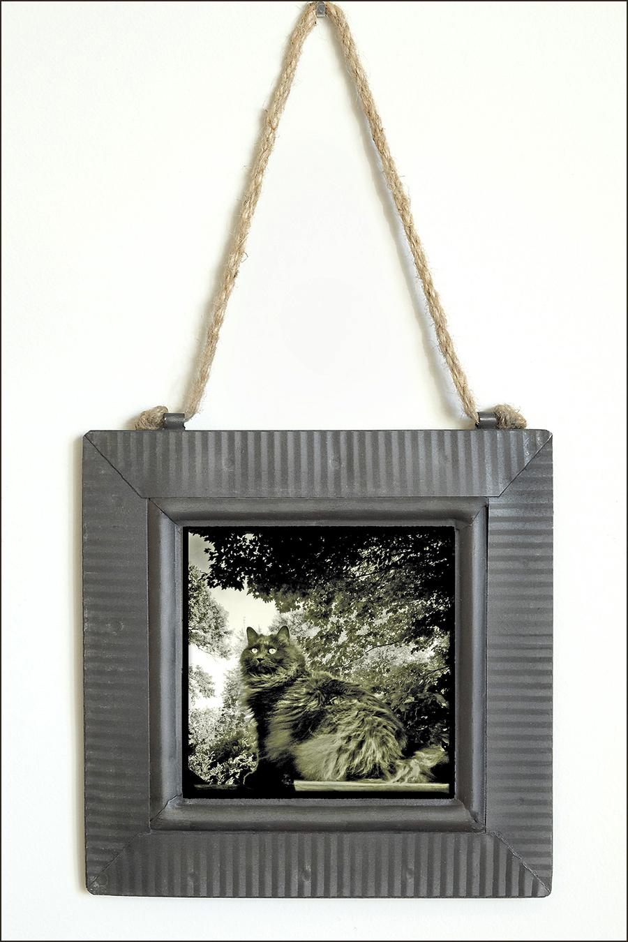 Robin Davis Photography - The LIttle Gems prints on metal