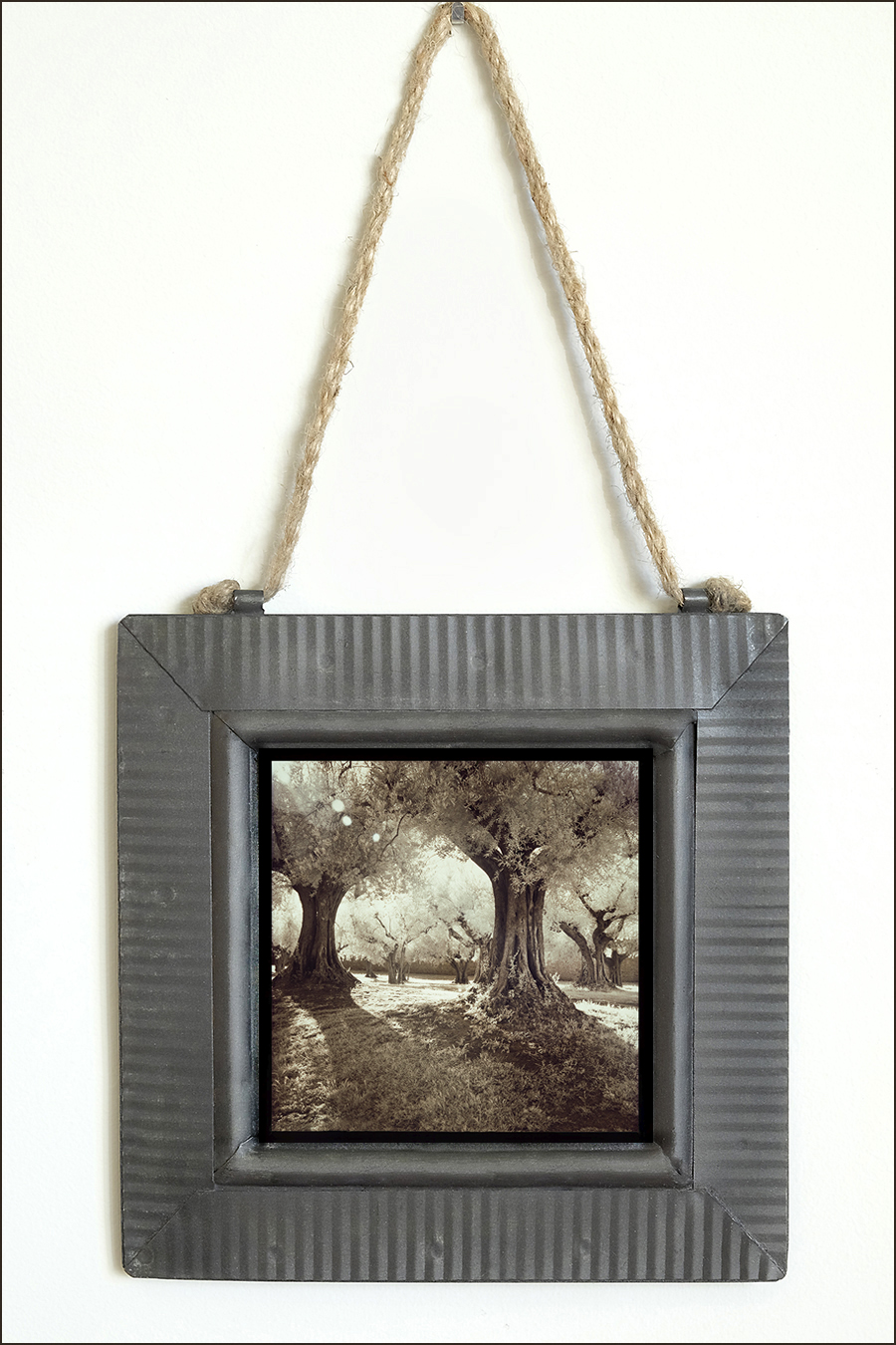 Robin Davis Photography Image printed on metal and framed in tin - image is from her favorite magical olive grove near Cortona Italy and all effects are done totally in camera with infrared sensor